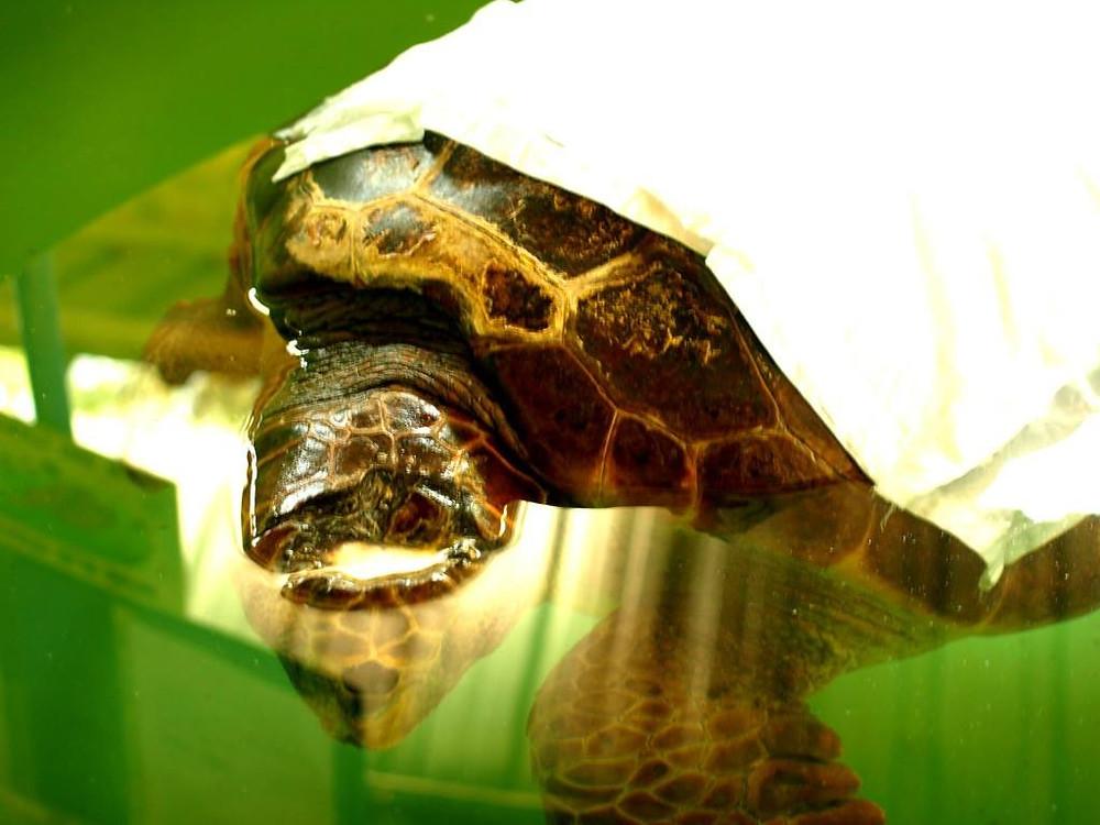 Dalyan, Turkey, Turtles