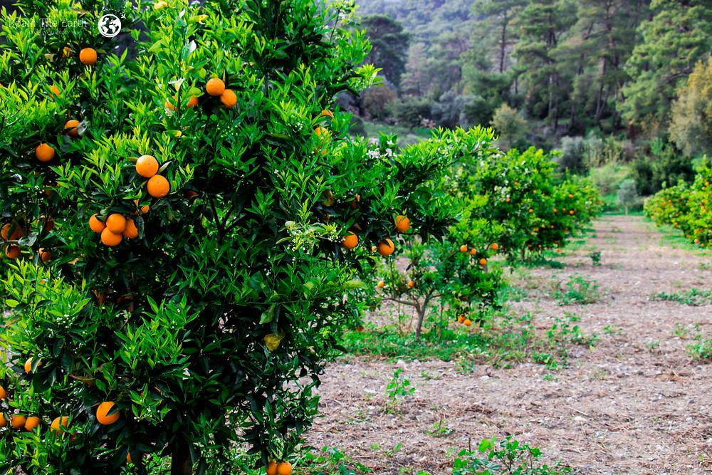 Dalyan Organic Farm