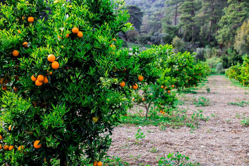 Organic Farm, Dalyan, Turkey