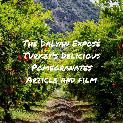 Discovering Dalyan - The Delicious Pomegranates of Turkey
