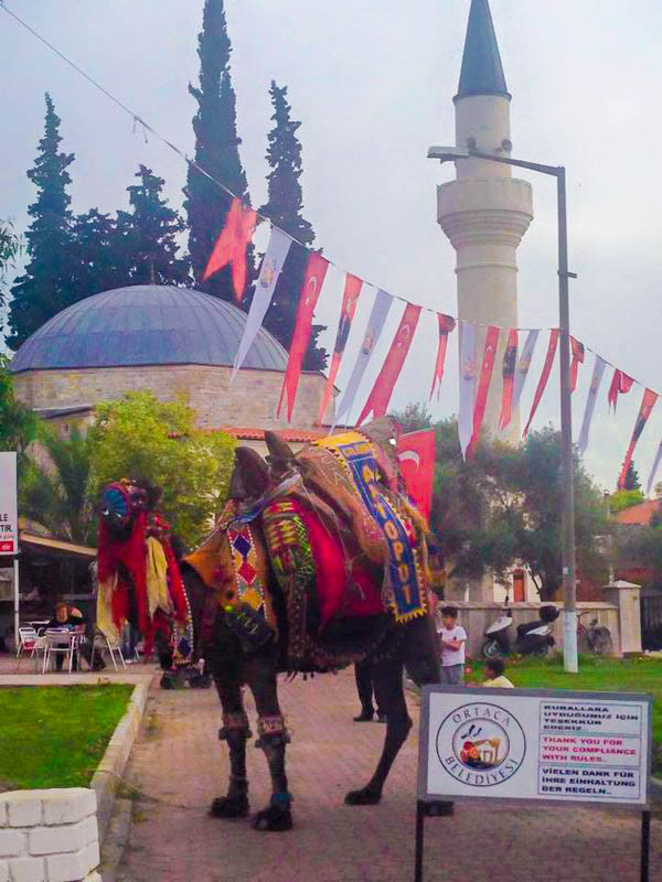 Camel Dalyan