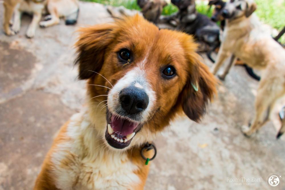 Dogs Dalyan Turkey