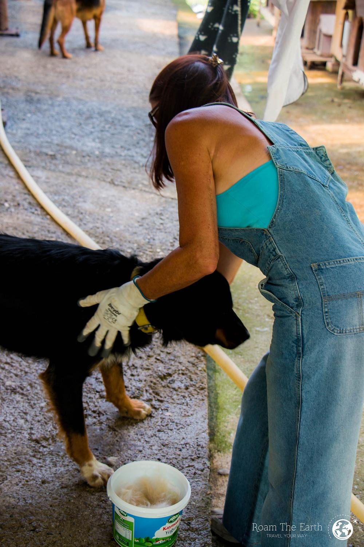 Dog Charity Volunteer