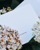 Telegrama-Insta-post-postal-florido.png