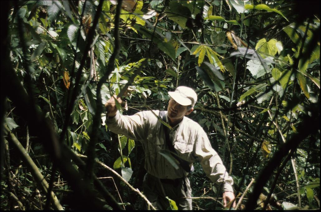 Barron cutting trail