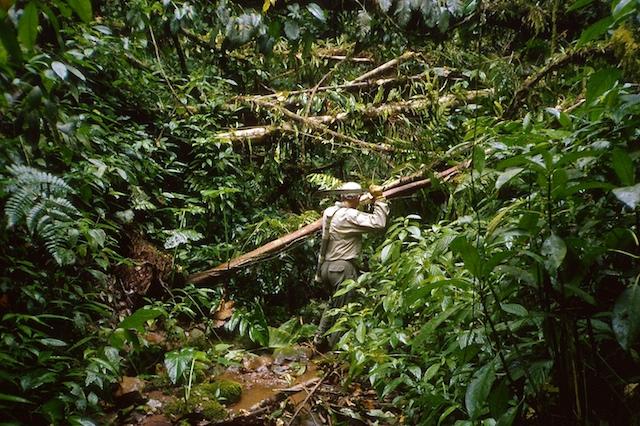 Barron cutting heavy bush, Heath headwaters