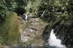 Heath headwaters