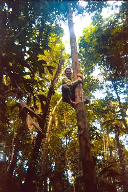 Barron climbs palm