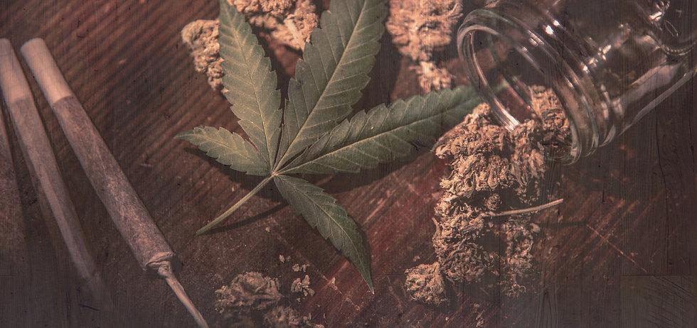 Cannabis Leaf and Buds