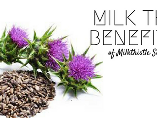 Milk the Benefits of Milk Thistle Seed Oil