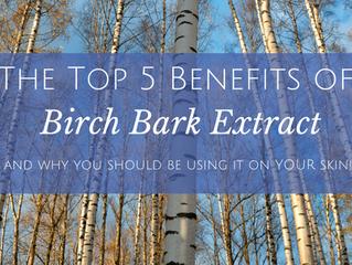 The Top 5 Benefits of Birch Bark Extract