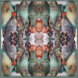 Fish of Brixton ...square dance