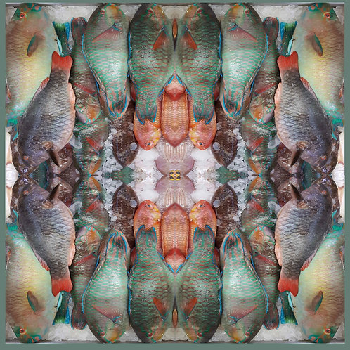 Fish of Brixton square pattern