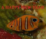 new year2.jpg