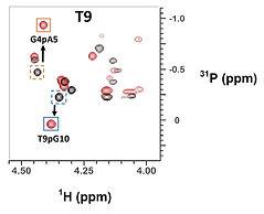 2D NMR pics.jpg