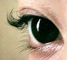 69908-eyelashperm4_edited_edited.jpg