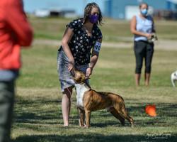 high res jaida sask terrier specialty 20