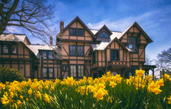 Newport Art Museum Daffodils 3 A