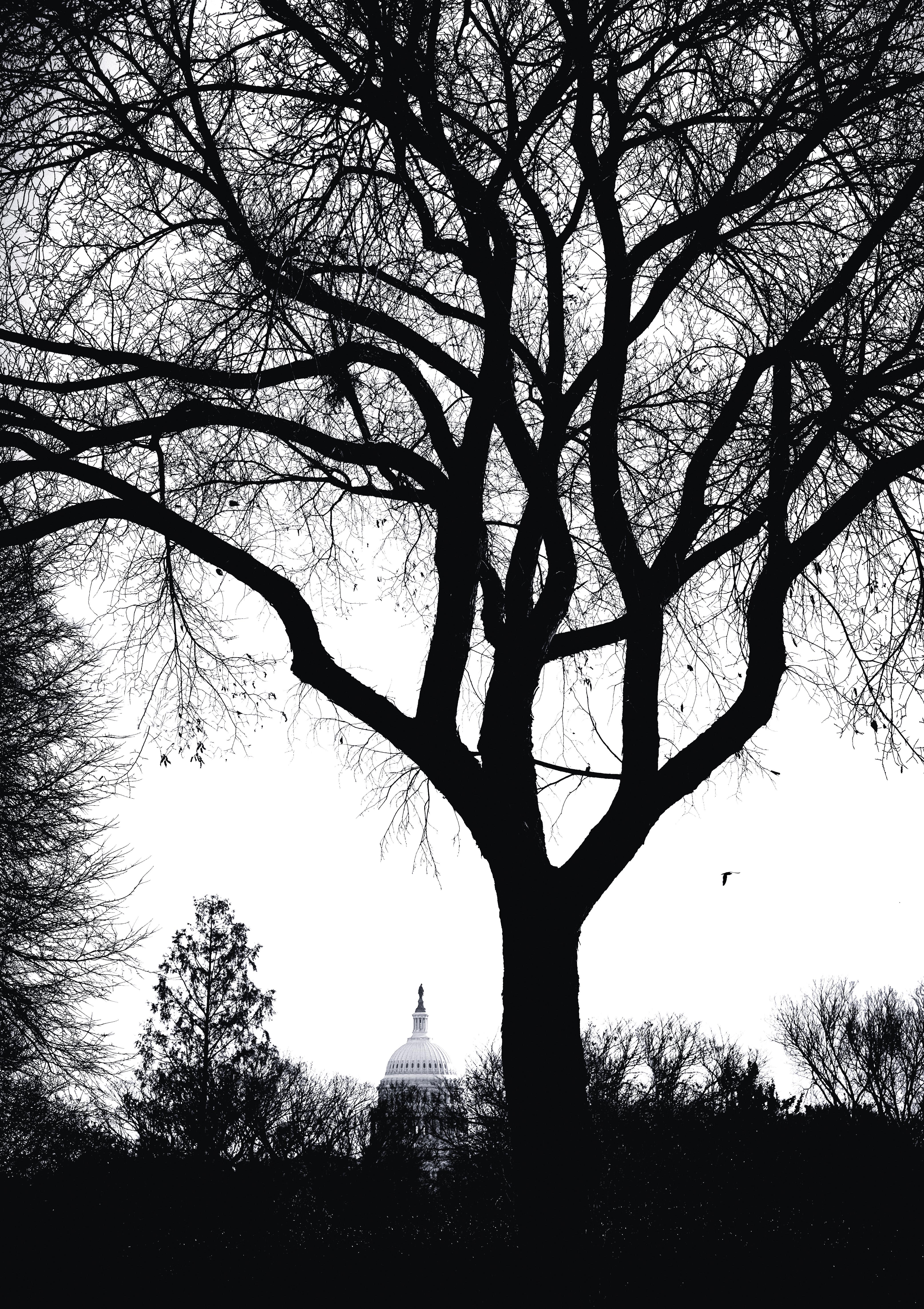 Tree S B