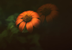 Pumpkin Soft Dbl