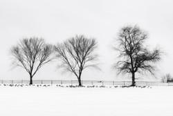 Winter Field C B