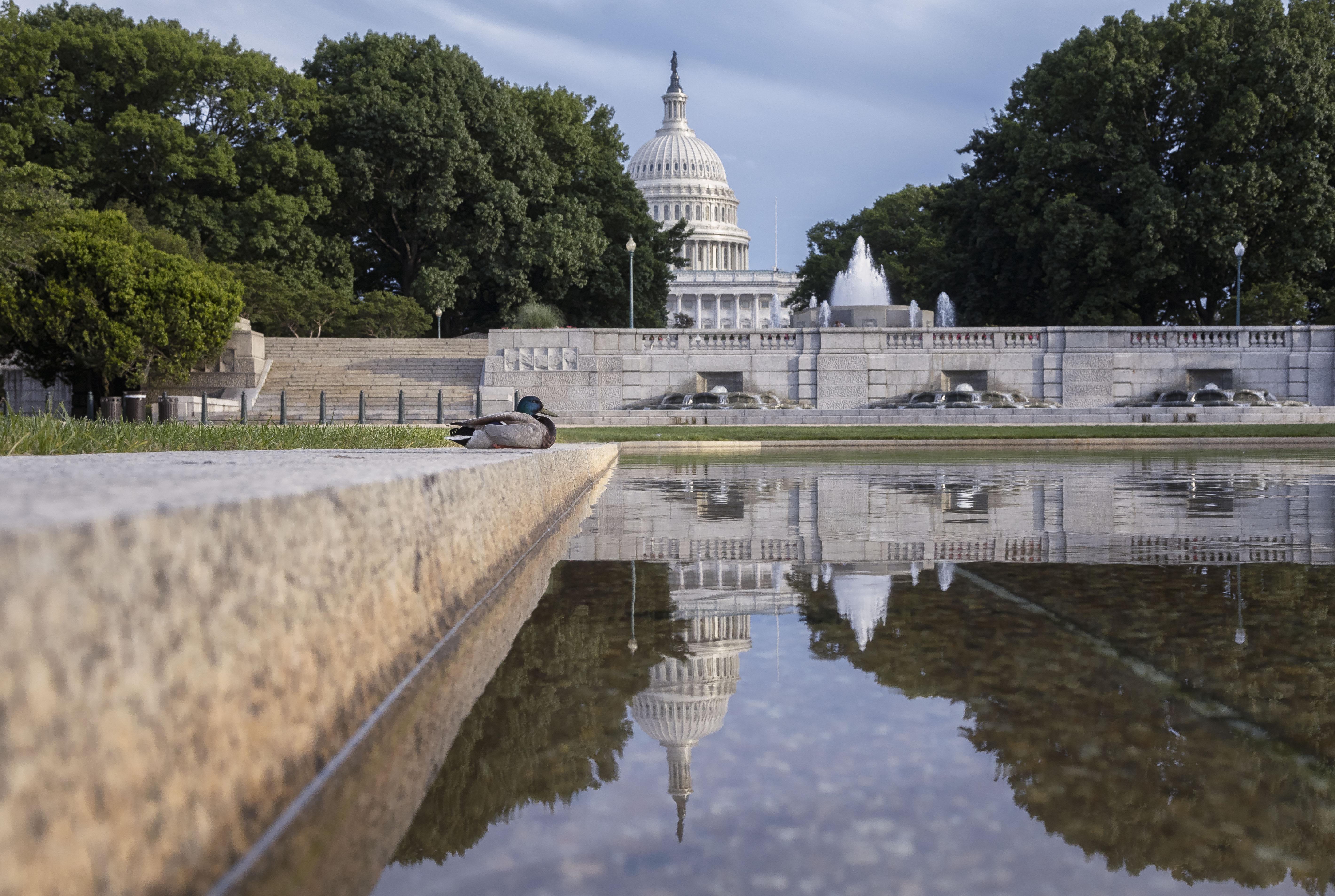 Capitol Duck