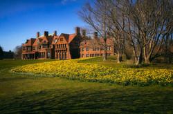 Daffodils Blooming 4 A