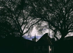 Steeple in the trees A