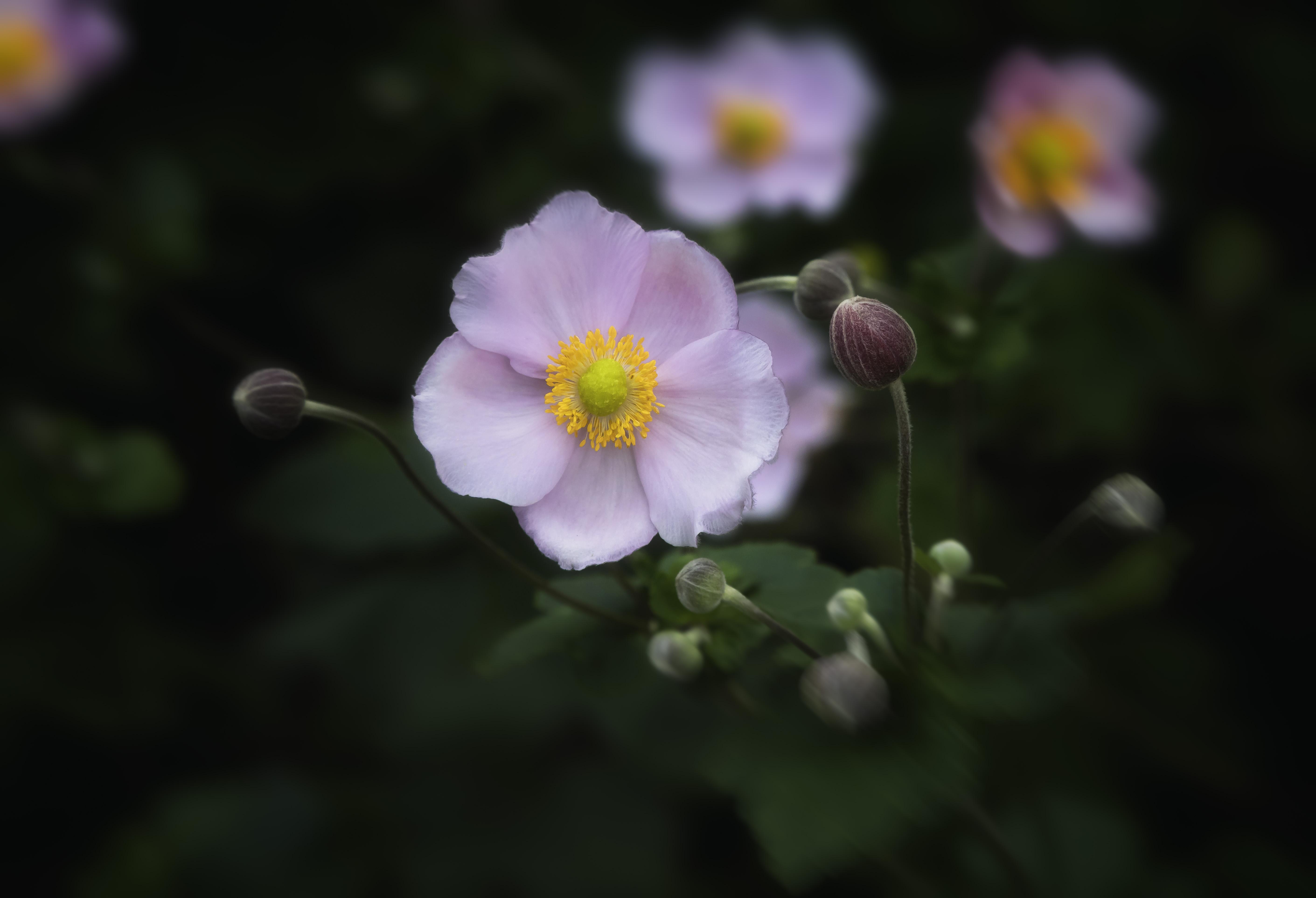 Bulbs & Blooms BL