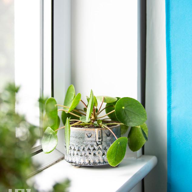 Inhabit Plant Pot