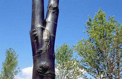 Bronze Tree Trunk detail
