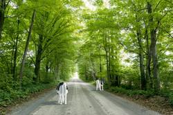 Crowes Road