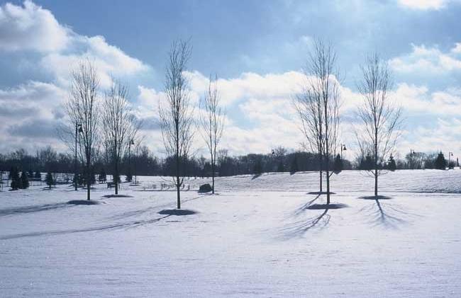 Circle of Trees, 2000