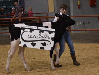 GDYF's First Dress-A-Cow Kicks Off State Dairy Show