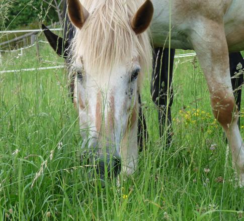 Sigale dans les grandes herbes