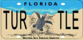 Sea-Turtle-License-Plate-300x153_edited.