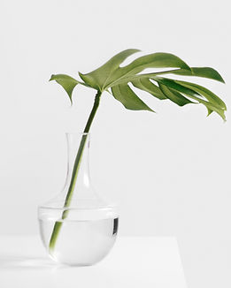 Palm frond in a jar