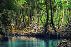 Los Haitises Mangroves