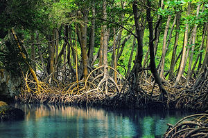 Dominican_republic_Los_Haitises_mangroves.jpeg