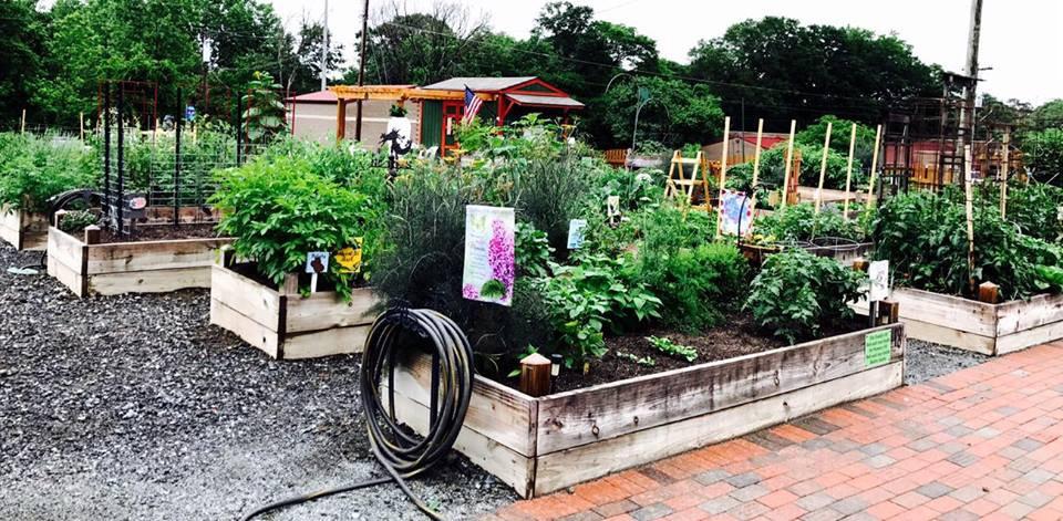 scott garden big.jpg