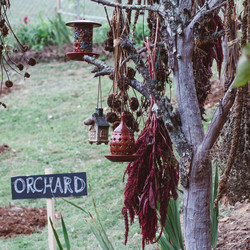 orchardbirdfeederinsta