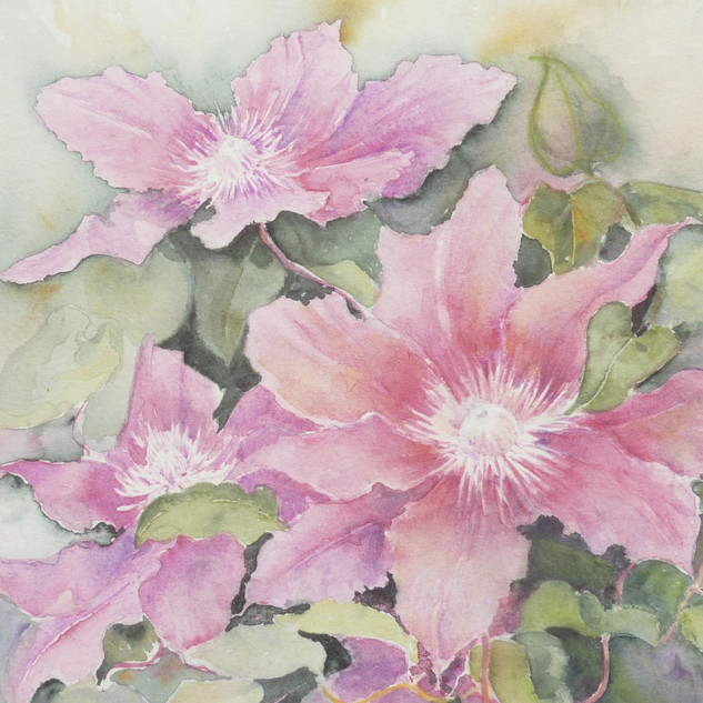 Julie Curry - Clematis