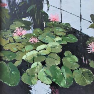 Water Lilies at Kew