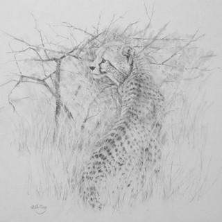 Gloria Shilling- Cheetah Cub
