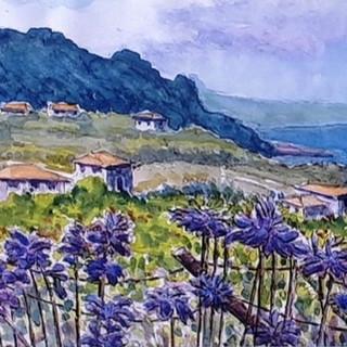 Agapanthus Madeira