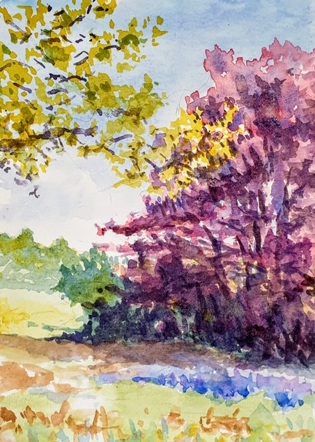 Joe Norris- Corona Spring
