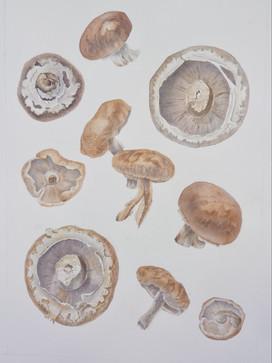 JC02-Melody of mushrooms-23cm x 31.5cm.j