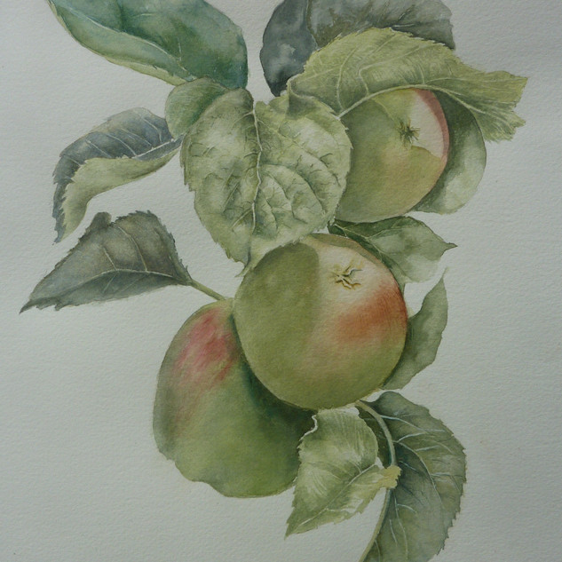 Julie Curry - Apples, harvest time