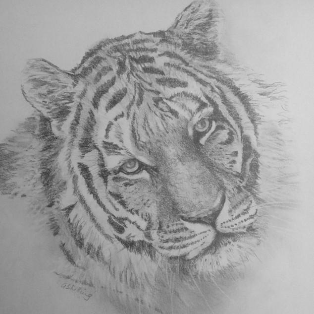 Ethans Tiger