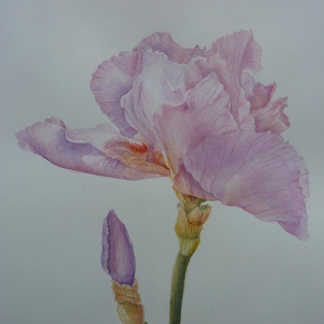 Julie Curry - Iris